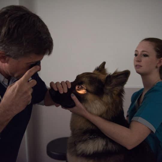 Vétérinaire Tournamy Mougins examen des yeux