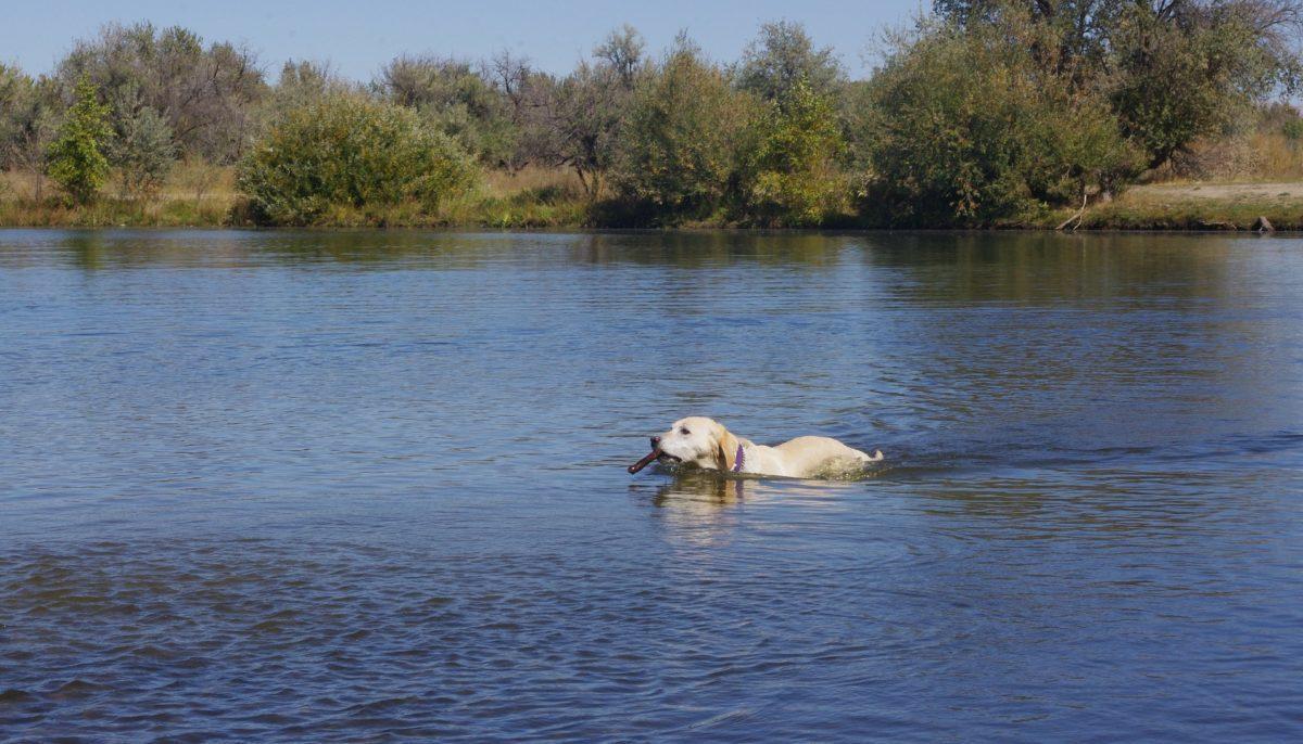 Vignette-chien-baignade-1200x686.jpg