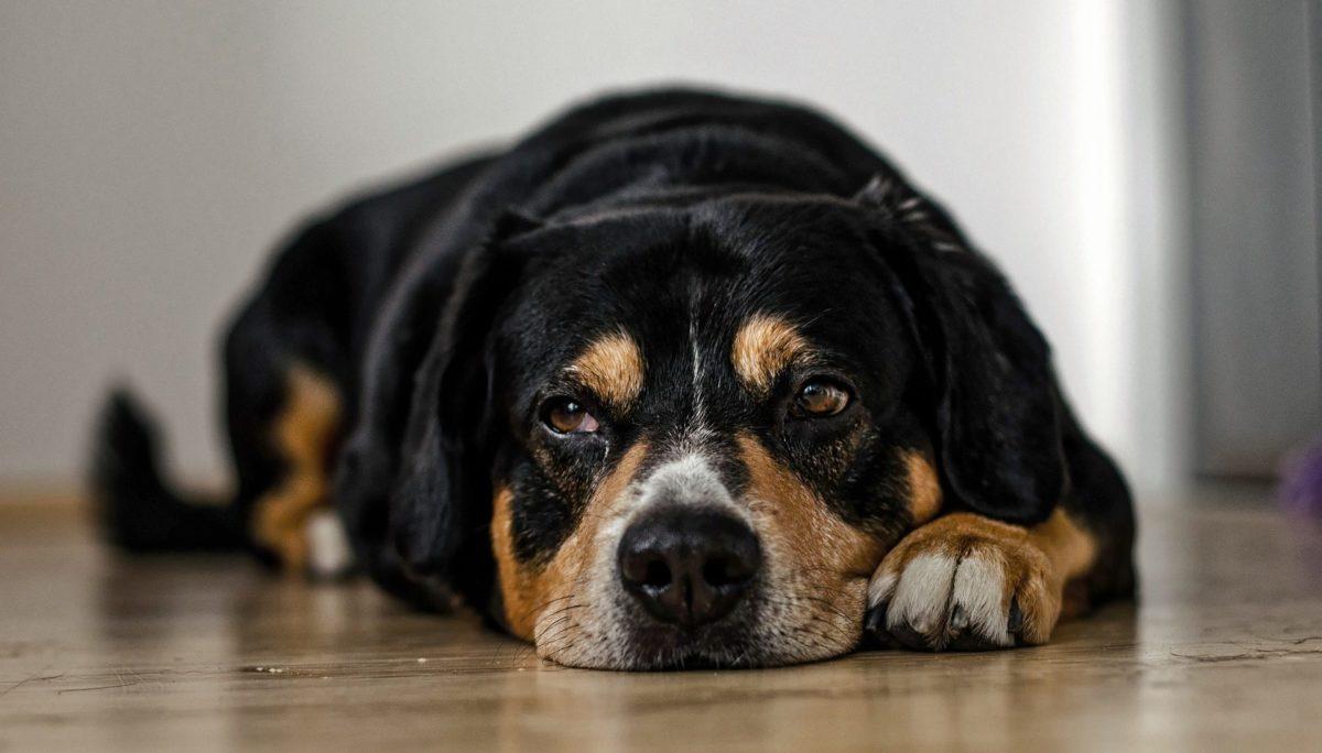 dogs-958216_1920-e1512663939159-1200x684.jpg