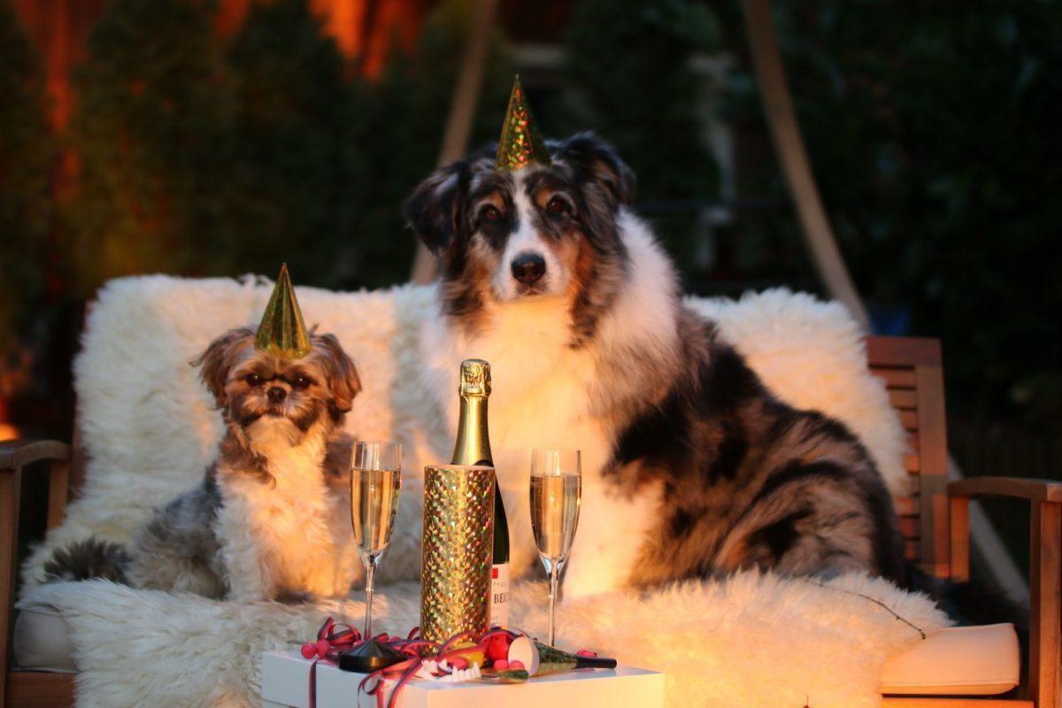 Nouvel-an-chien-e1515768086425-1200x800.jpg