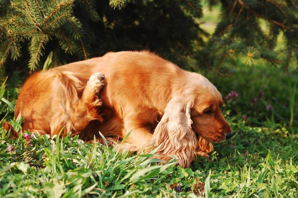dog-2410875_1920-e1520957531723.jpg