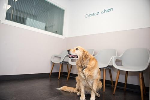 Vétérinaire Tournamy Mougins attente