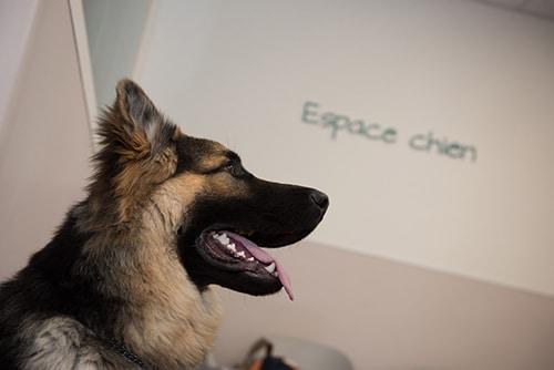 Vétérinaire Tournamy Mougins espace chiens