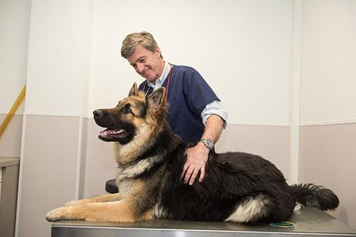 Vétérinaire Tournamy Mougins Berger allemand