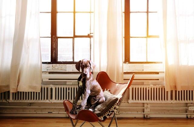 Vétérinaire Tournamy Mougins chien