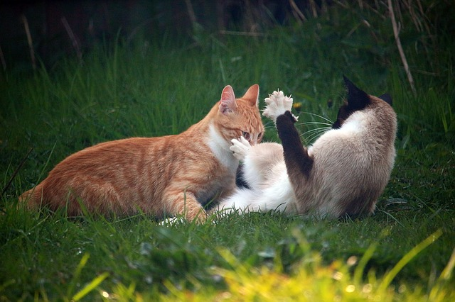 cat-1366201_640.jpg