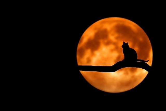 Chat nuit