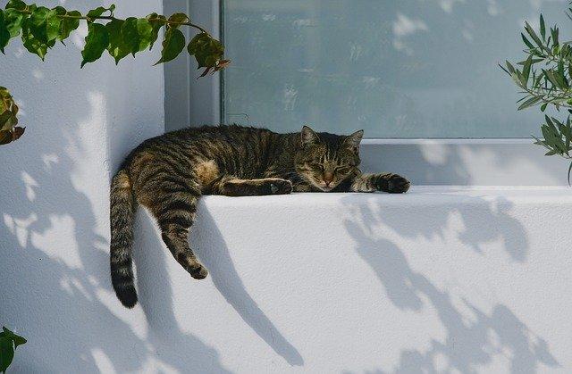 pixabay-cat-3778087_640.jpg
